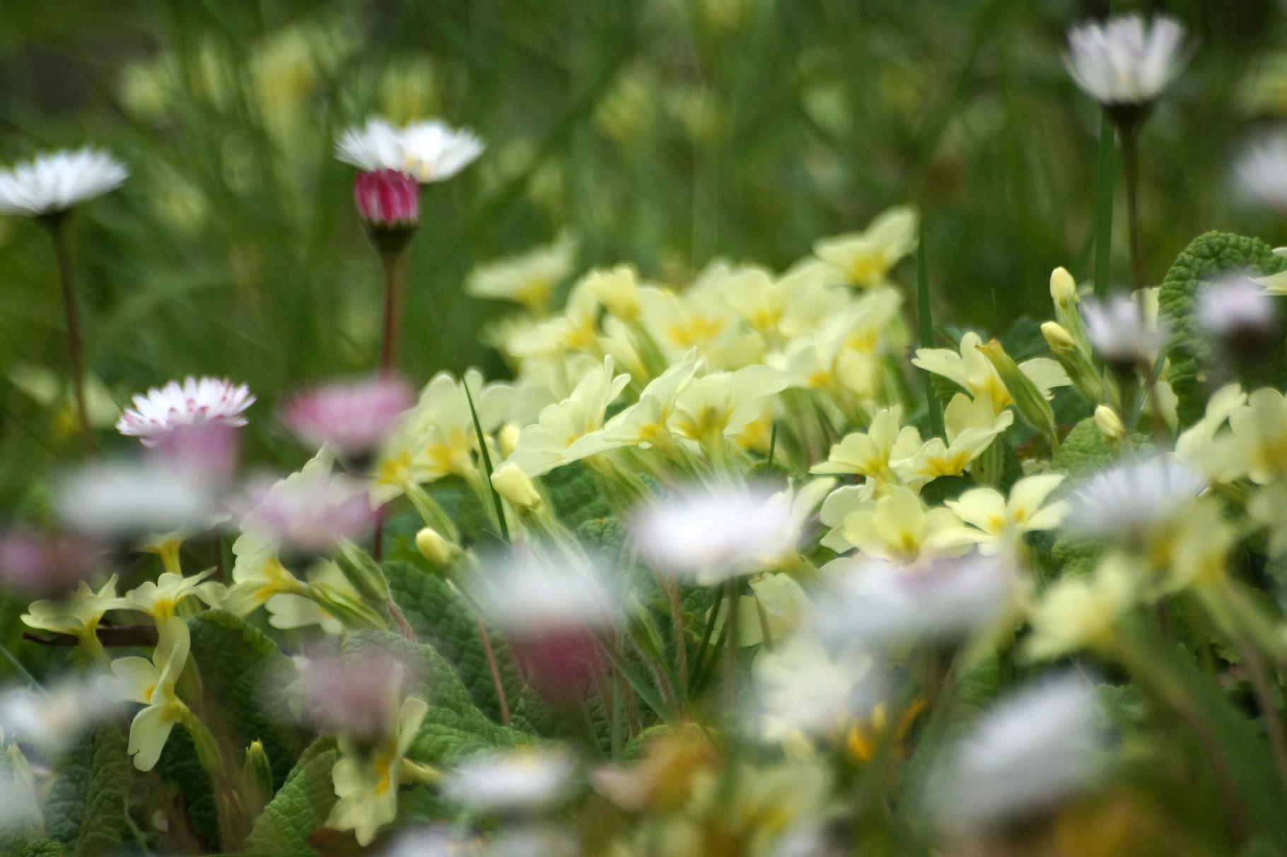 Bouquet de printemps 2