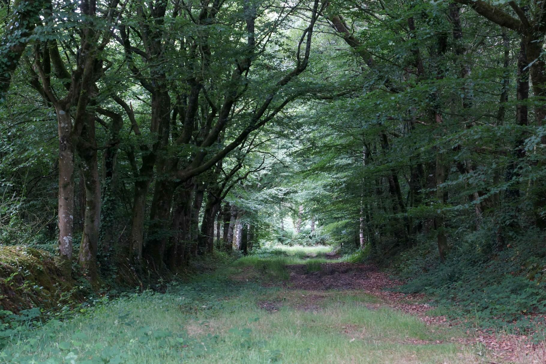 Allée Forestière de Cohiniac