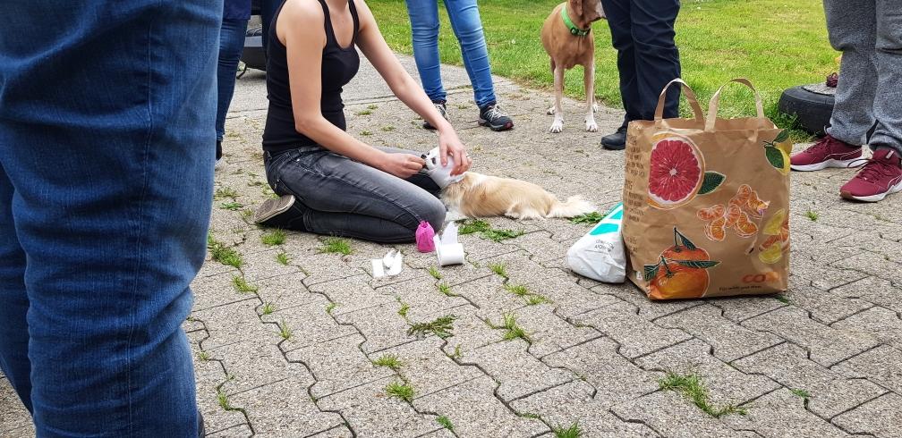 Hundeseminare