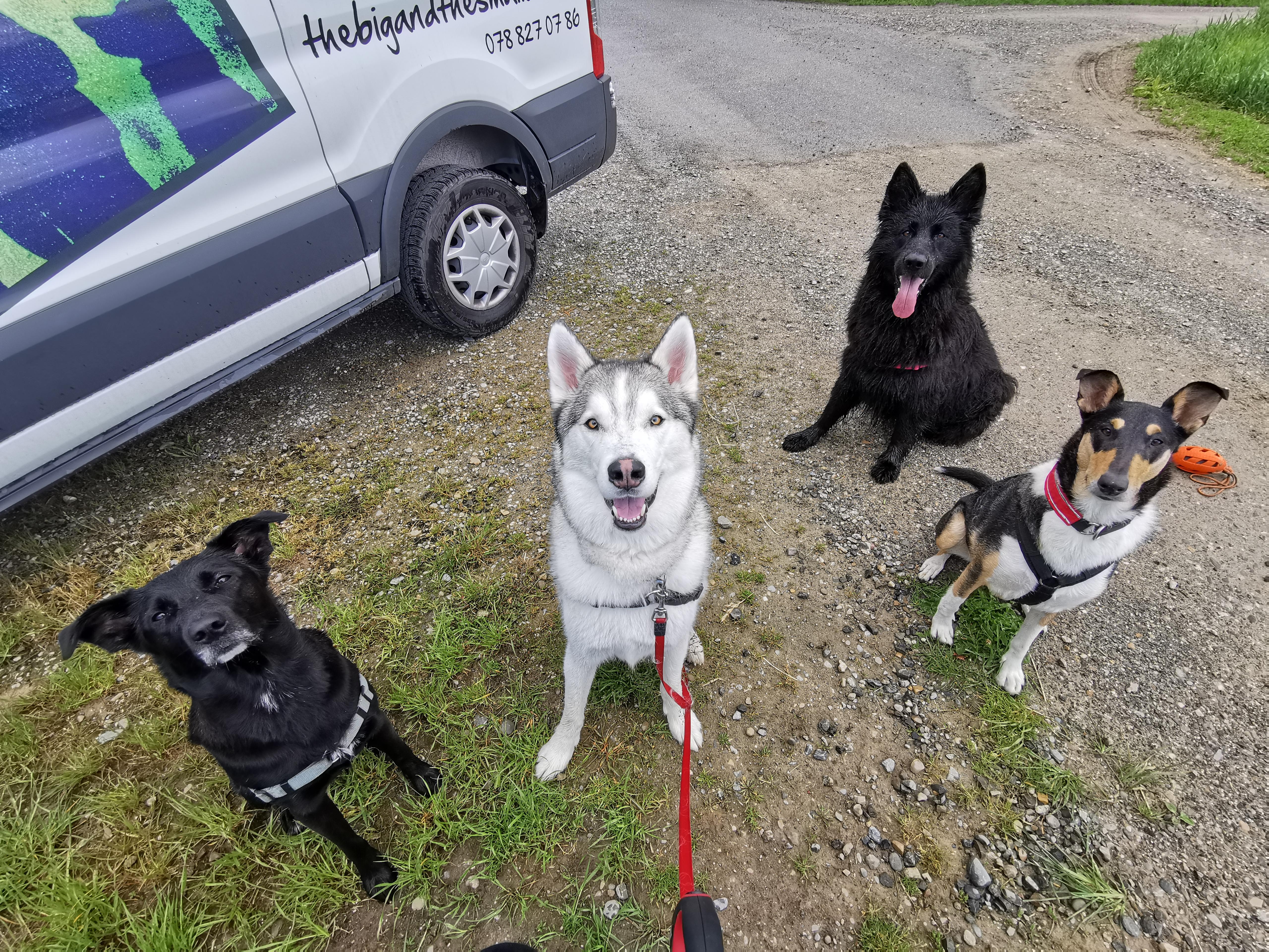 Hundeschule für alle Rassen, Problemhunde, Obligatorische Kurse, Einzellektionen