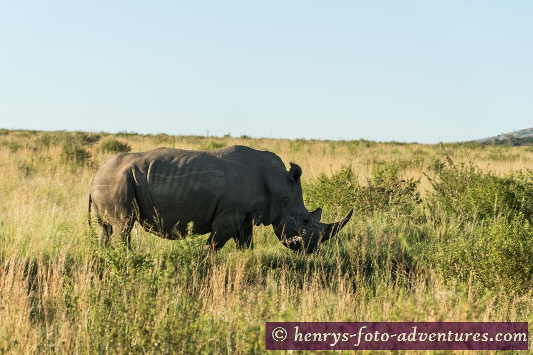 zurück bei den Rhinos