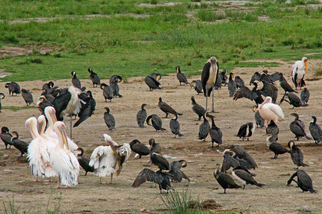 ein Vogelparadies