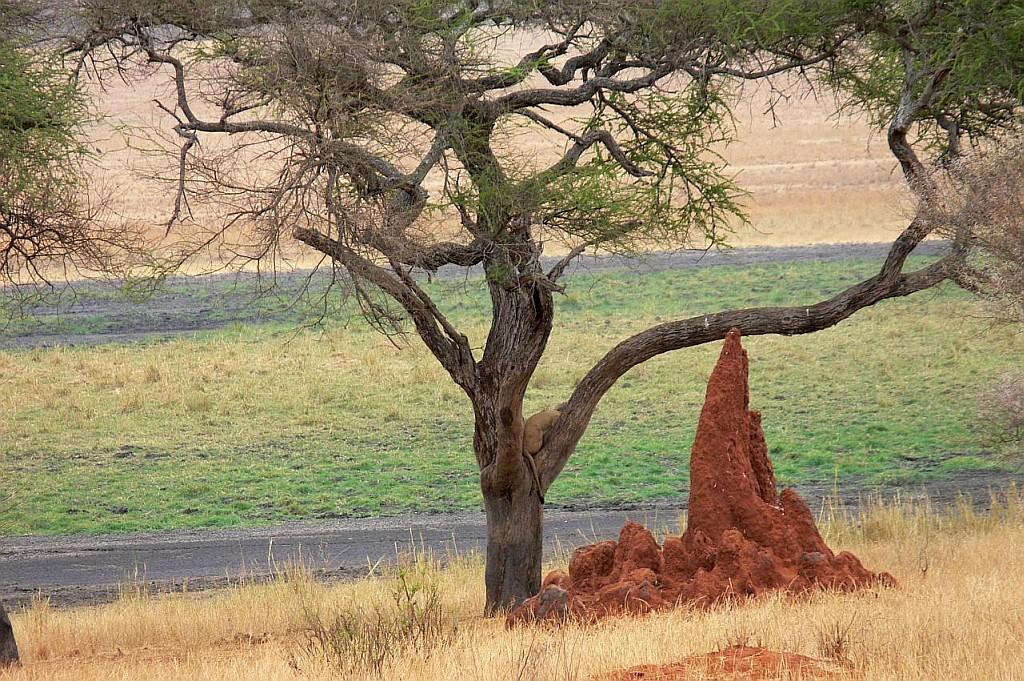 Termitenbau