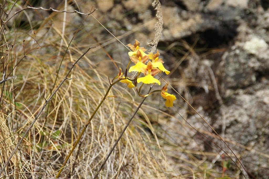 eine kleine Orchidee