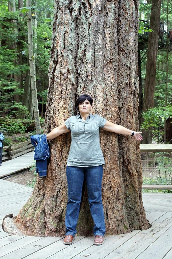"Capilano Nat.Park, Subpolarer Regenwald mit riesigen ""Red Canadian Cedar"""