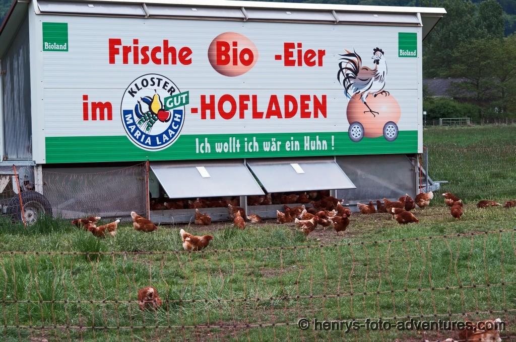 glückliche Hühner!