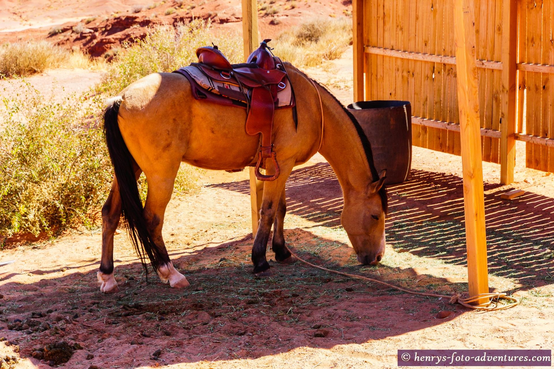 hier darfst du mal richtig Cowboy spielen