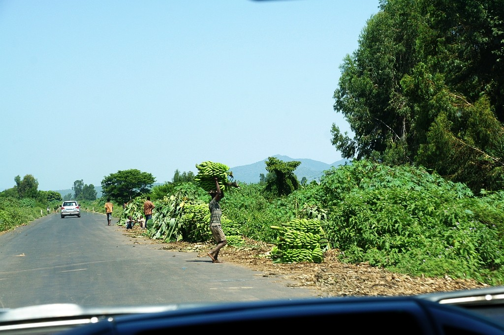 Bananenernte in Arba Minch