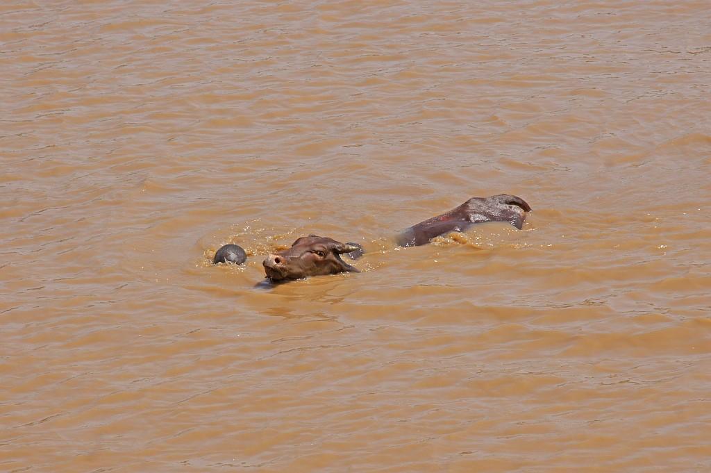 einheimische und Tiere schwimmen über den Fluss