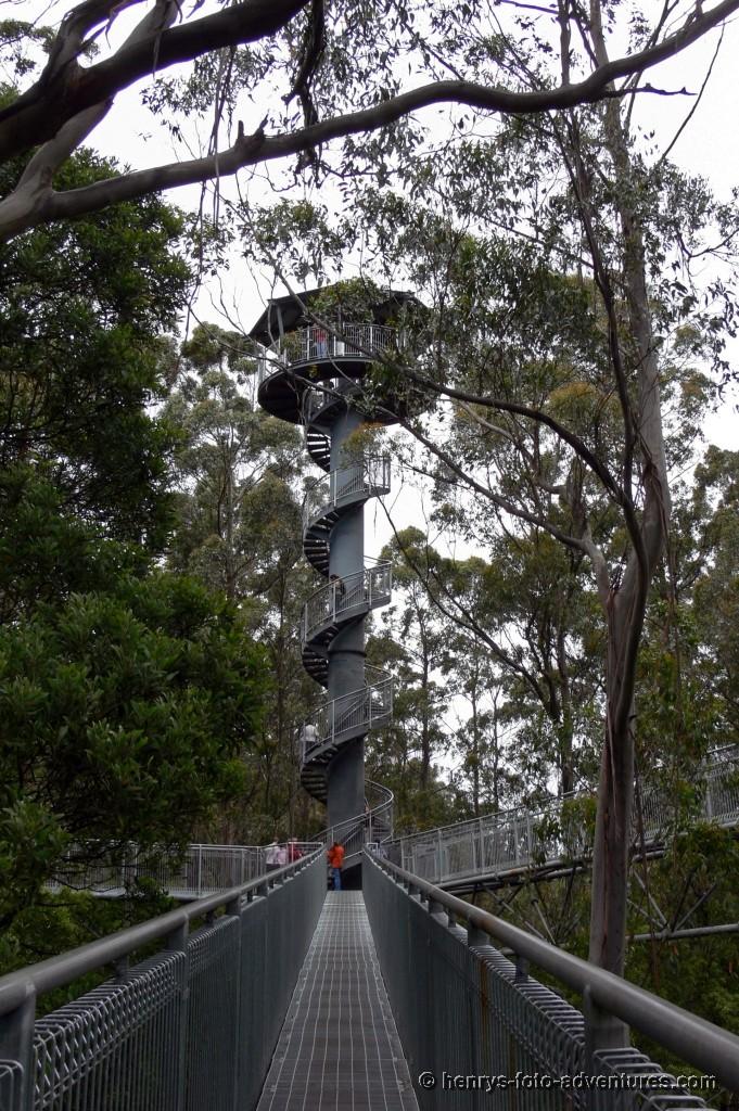 der Turm ist schon über den Baumkronen
