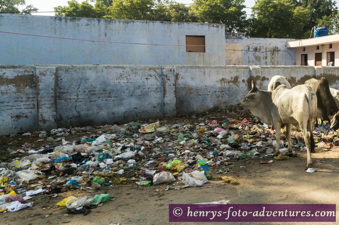 und Futter suchend auf der Müllhalde