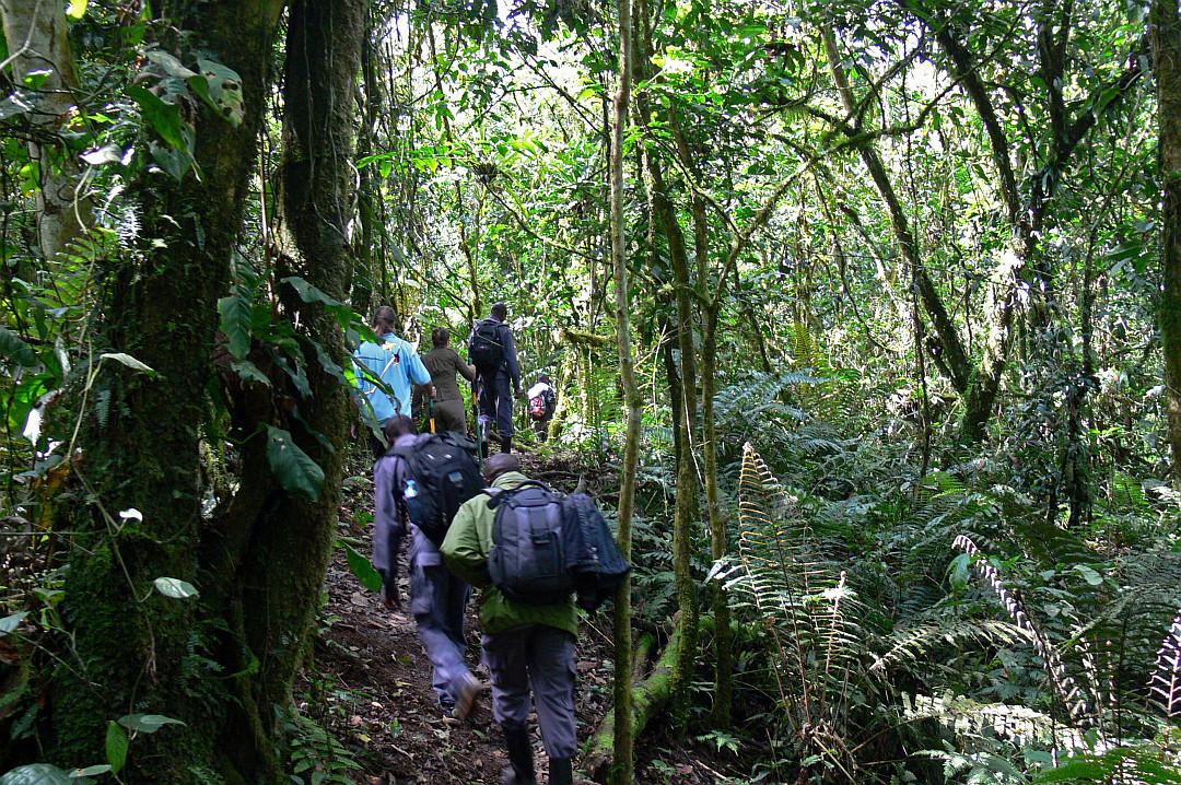 ab in den Tschungel
