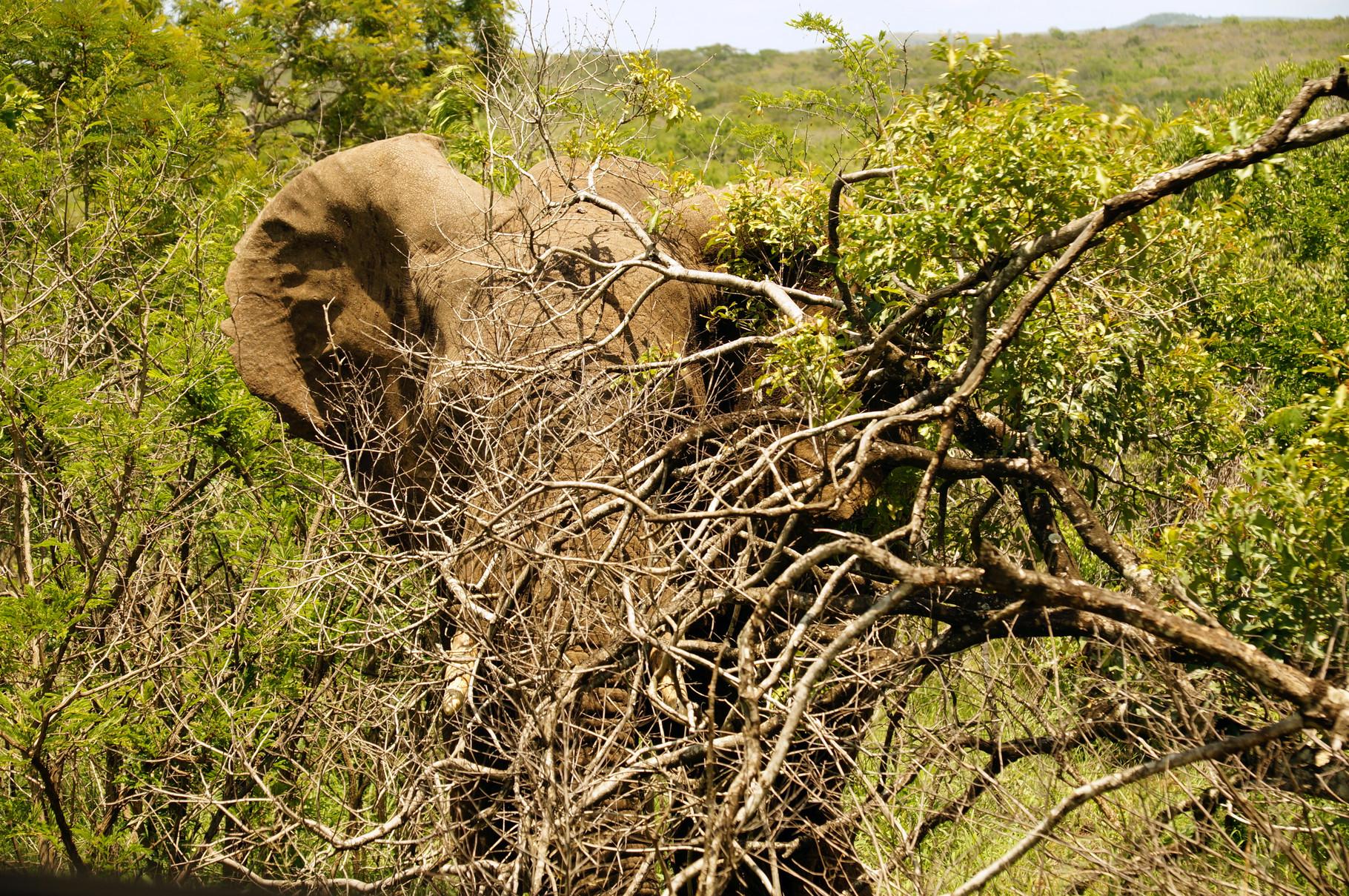 wer schaut den da durch den Busch