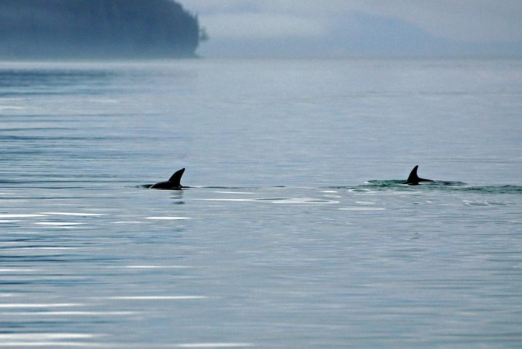 Delphiene umkreisen uns