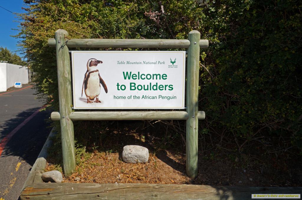 zu den Afrika-Pinguinen