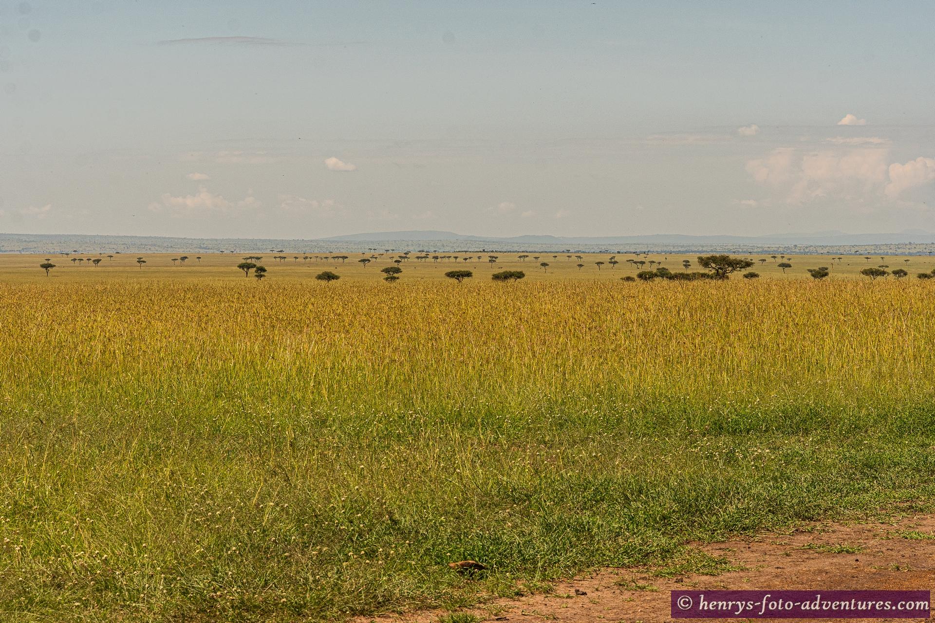 Blick in die Serengeti