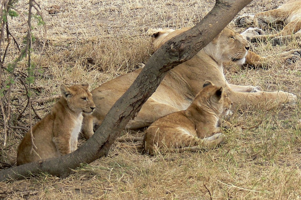 Mutter mit Jungtieren
