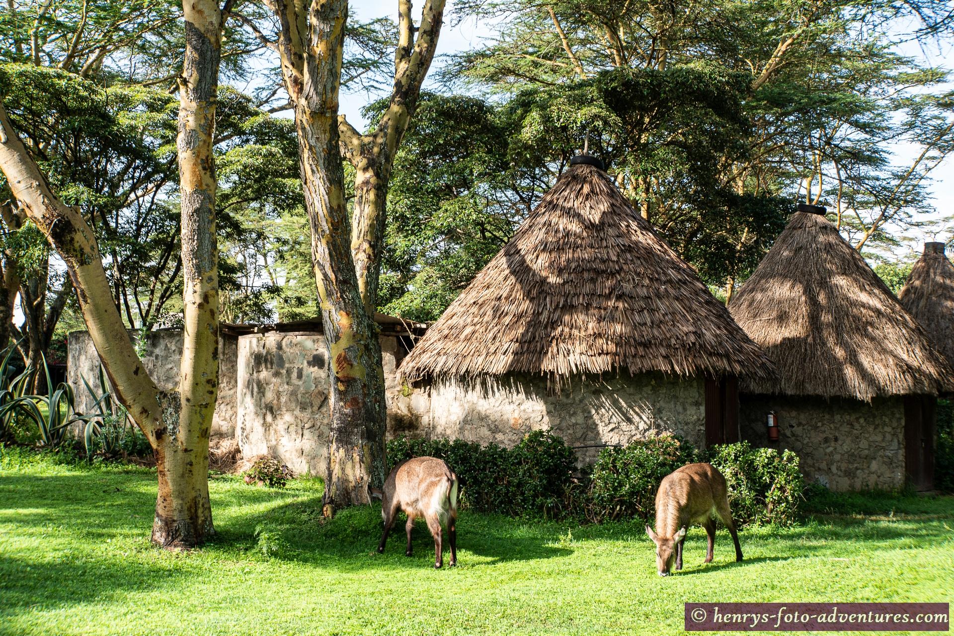 ein Tierpark innerhalb der Lodge