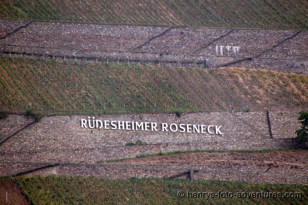 Blick auf die Rüdesheimer Weingärten
