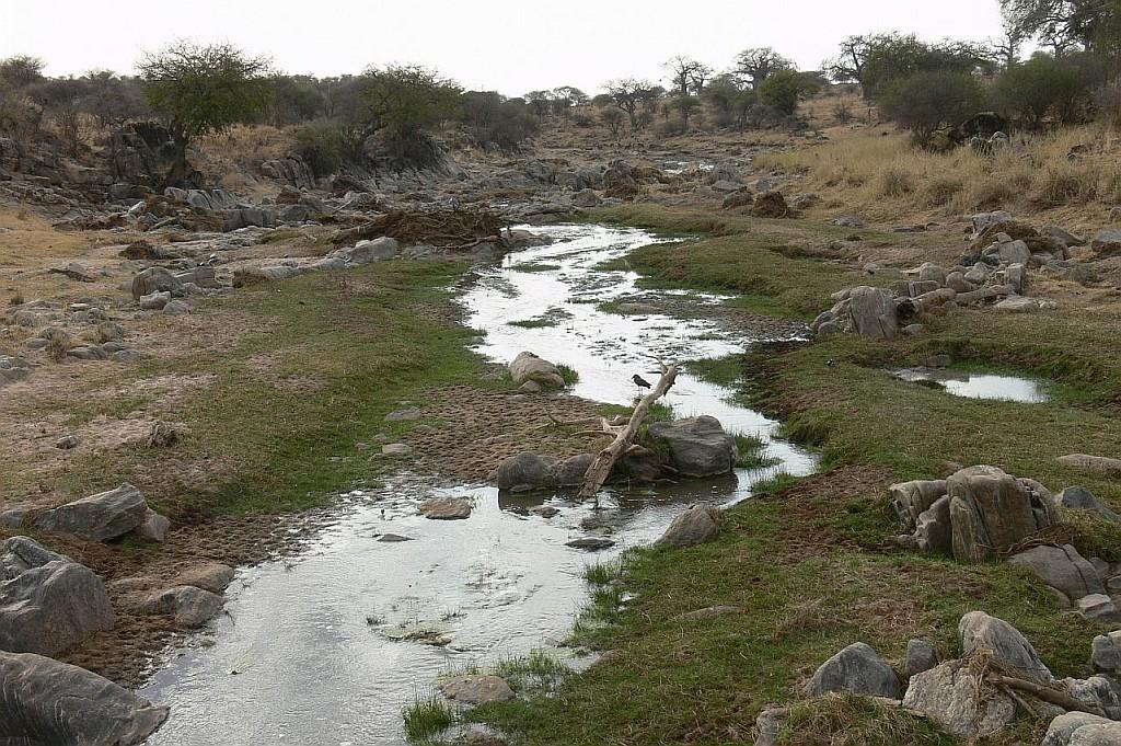 der Tarangire zu Ende der Trockenzeit