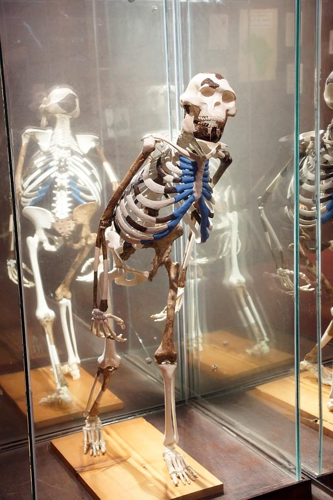 3,2 mill Jahre altes Skelet der 1m großen LUCY