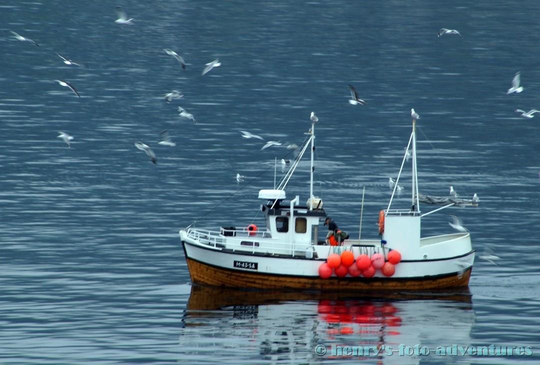 die Möven umkreisen einen Fischkutter