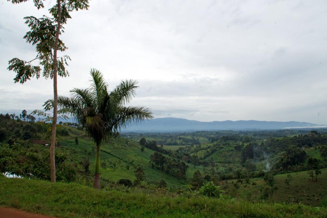 Blick auf das Rwenzori Gebirge