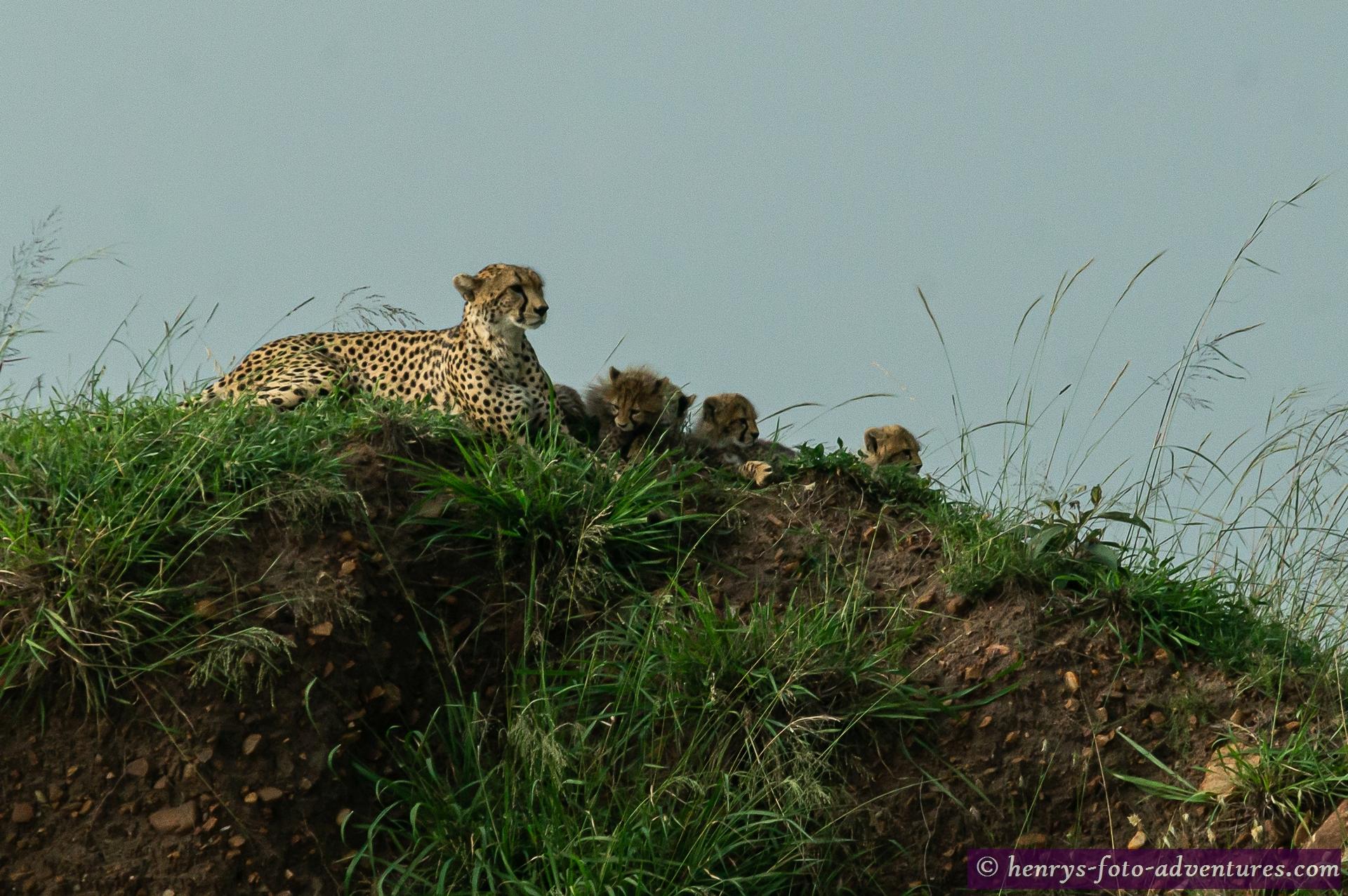 Mutter mit vier verspielten Jungtieren