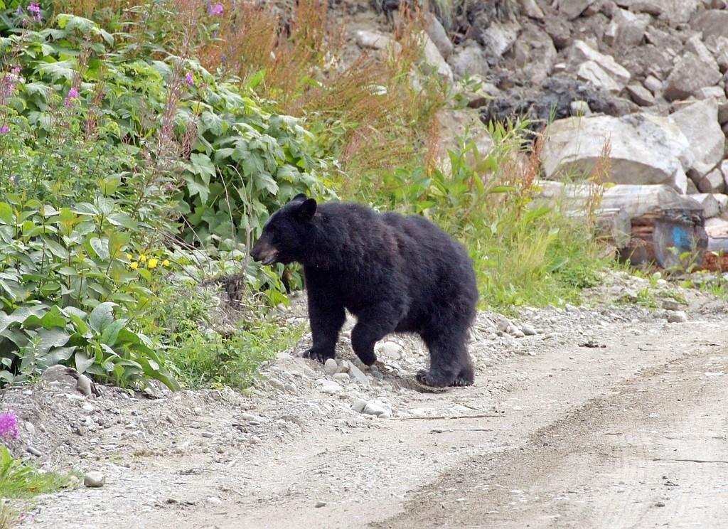 halt da ist ja ein Schwarzbär