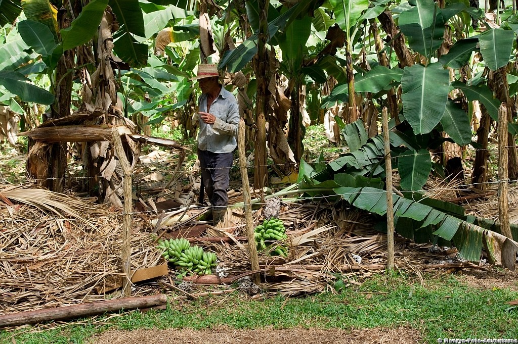neben einer Bananenplantage