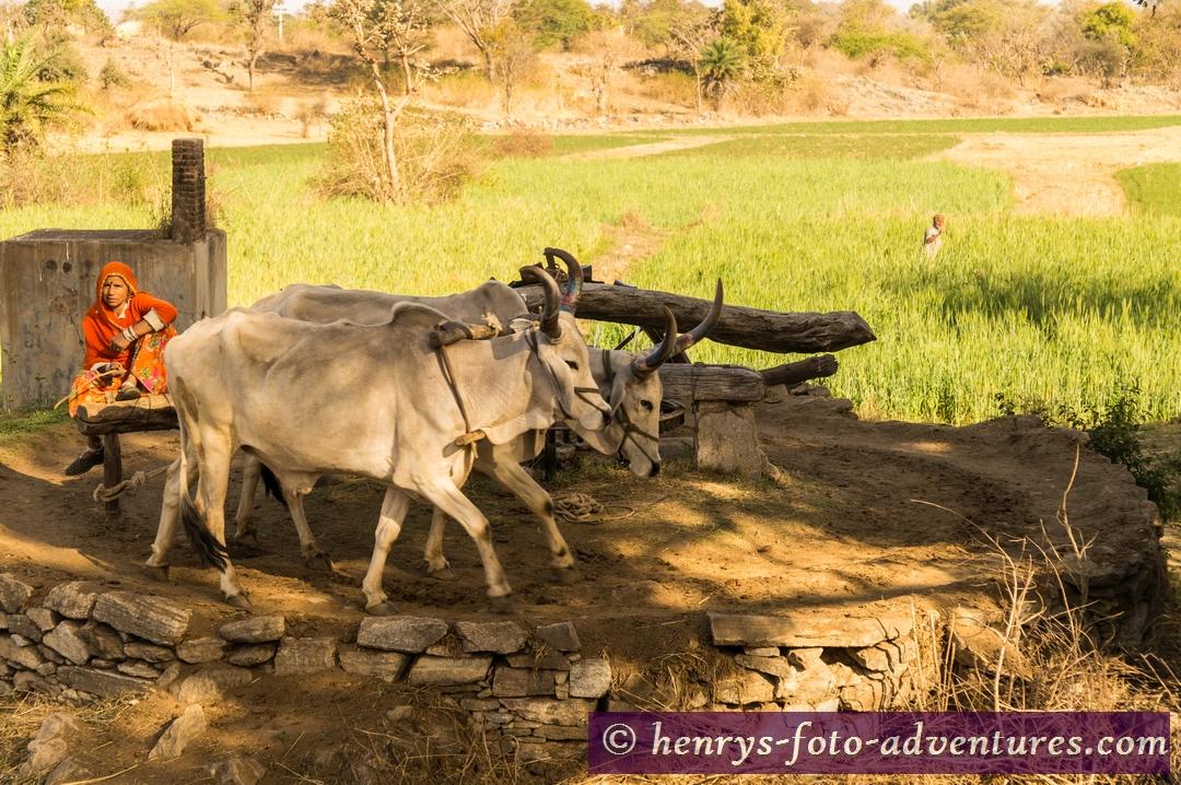 ein Ochsen-Brunnen