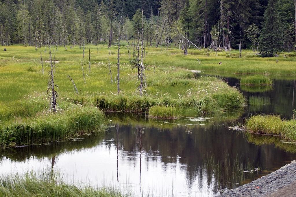unberührte Natur an der Grenze zu Alaska