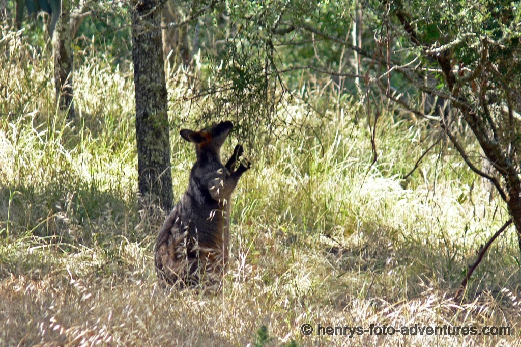 unser erstes Kangoruh
