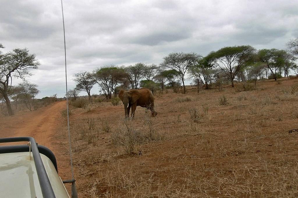 alter Elefantenbull