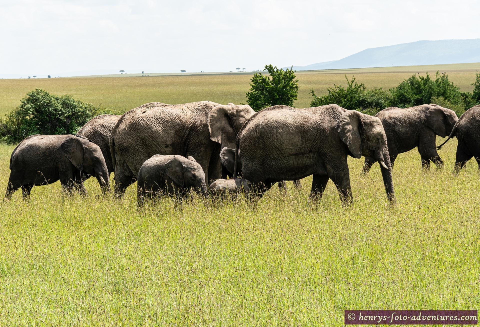 da kommt ja wieder unsere Elefantenherde