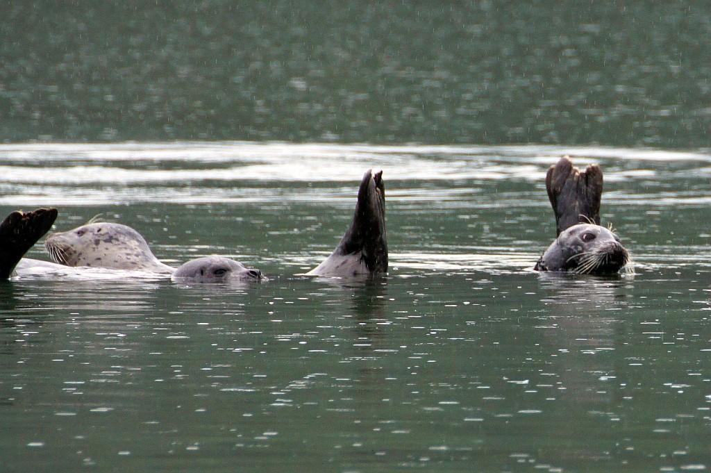 wir werden von Robben empfangen