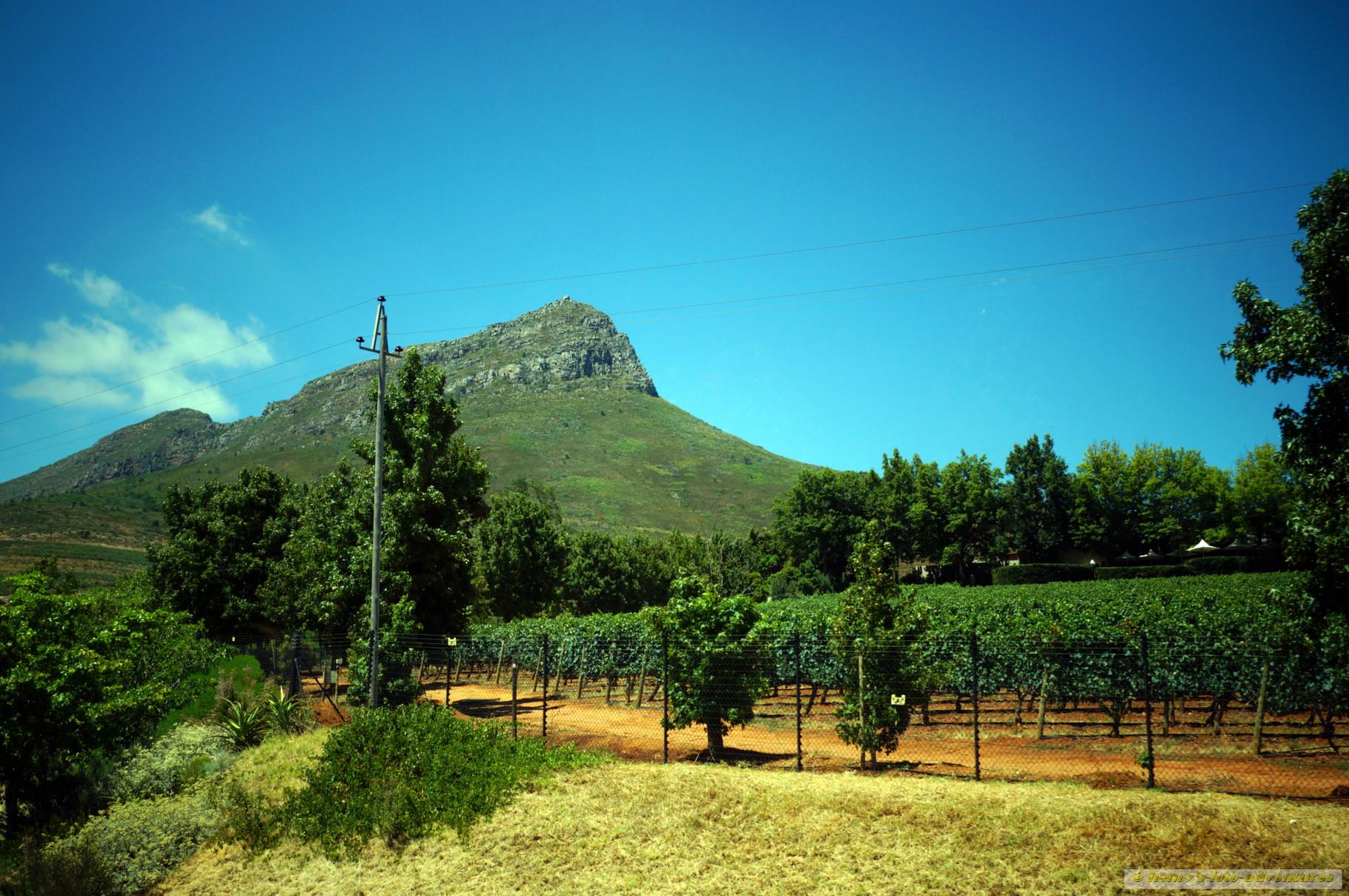 Wein- und Obstgärten entlang der Strasse