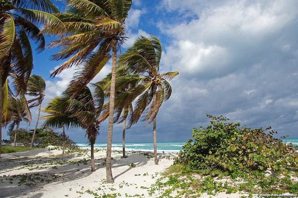der Strand, vom Wind zerzaust