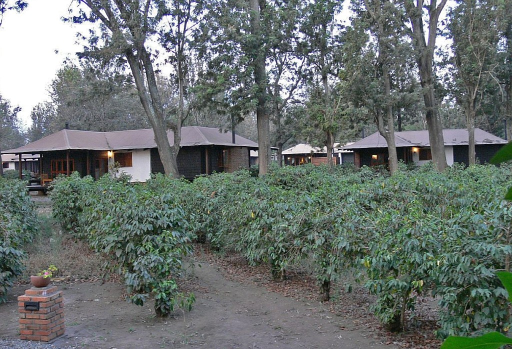 die Arusha Coffee Lodge, mitten in einer Kaffeeplantage