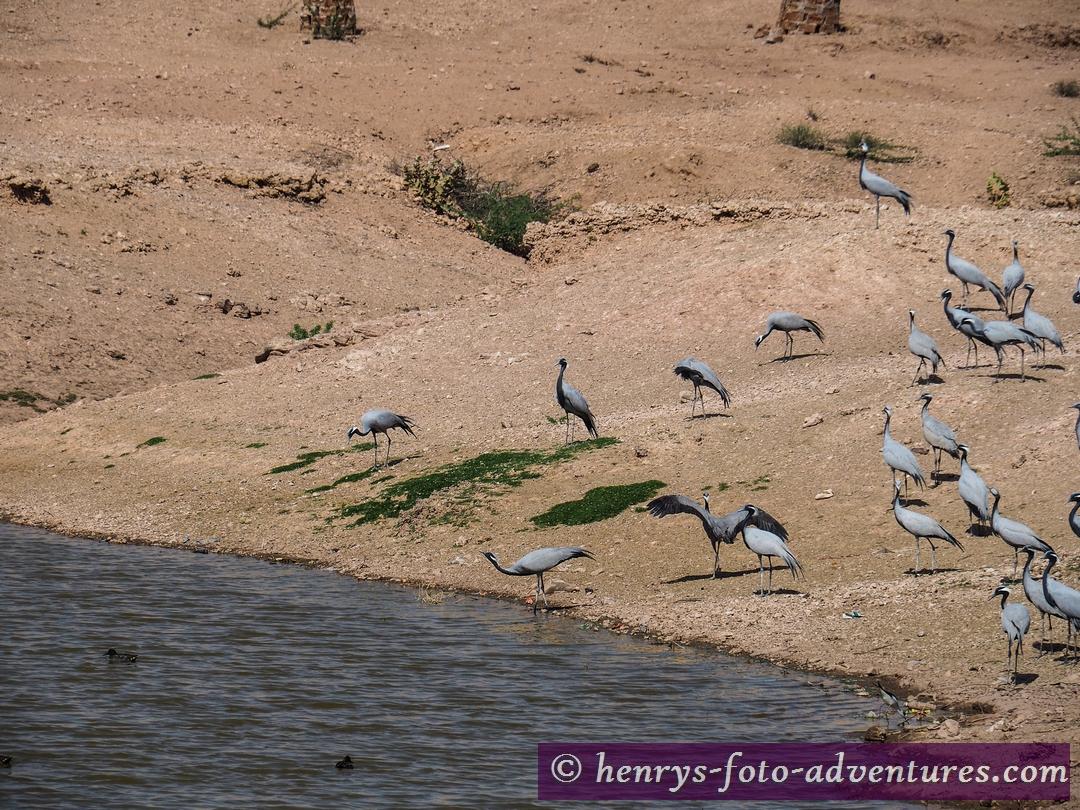 """Vogelschutzgebiet """"Karash"""""""