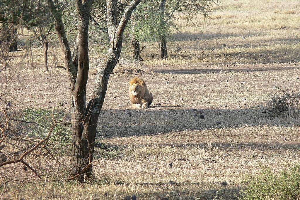 Abschied von der Serengeti
