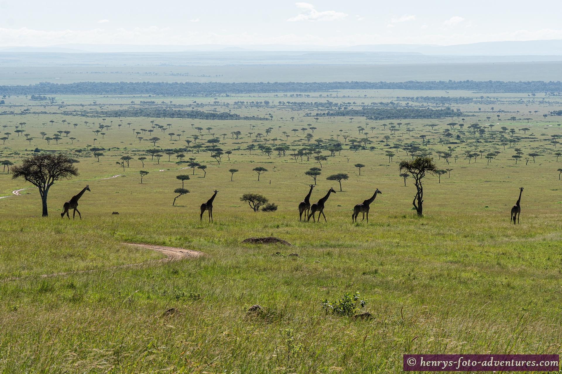 da unten ist anscheinend ein Treffen der Giraffen