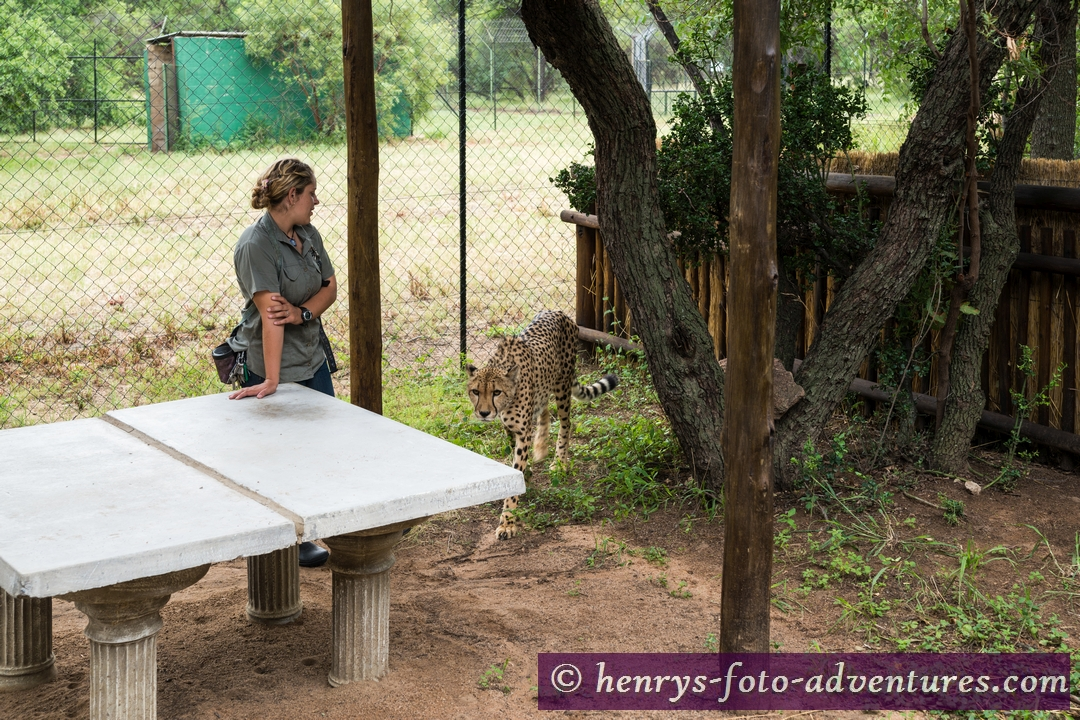 wir düfen einen Gepard streicheln