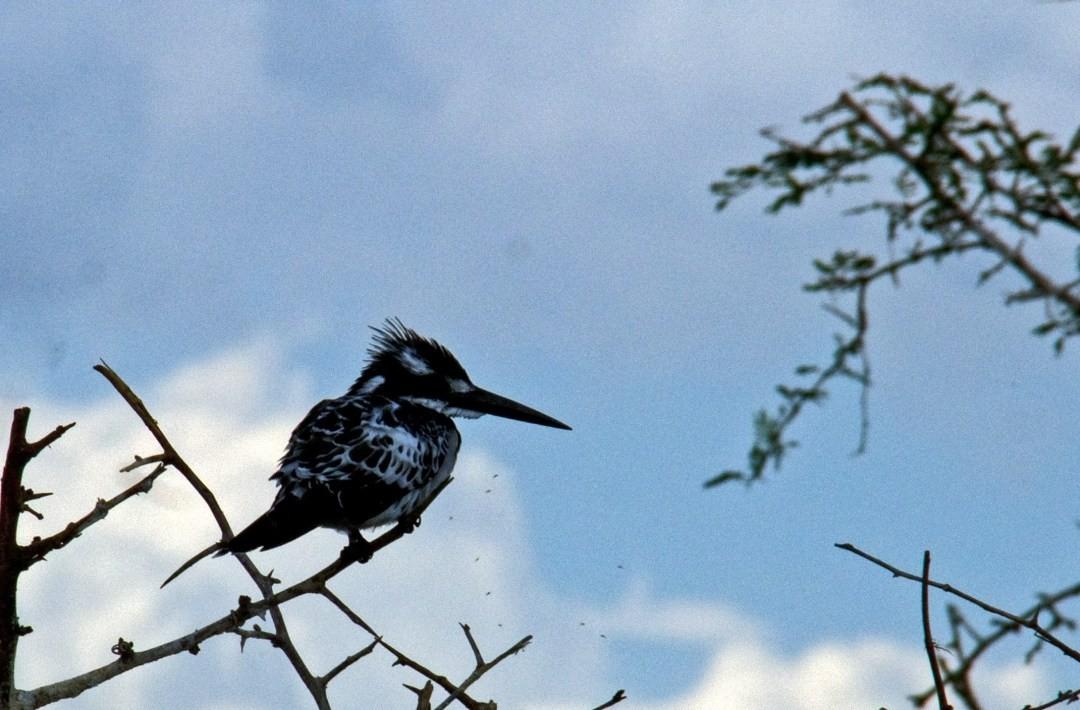 sehr hübsche Vögel