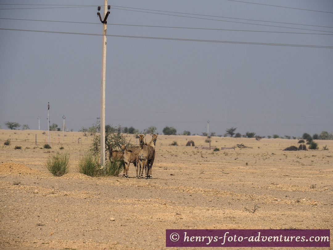 auf dem Weg nach Jaisalmer