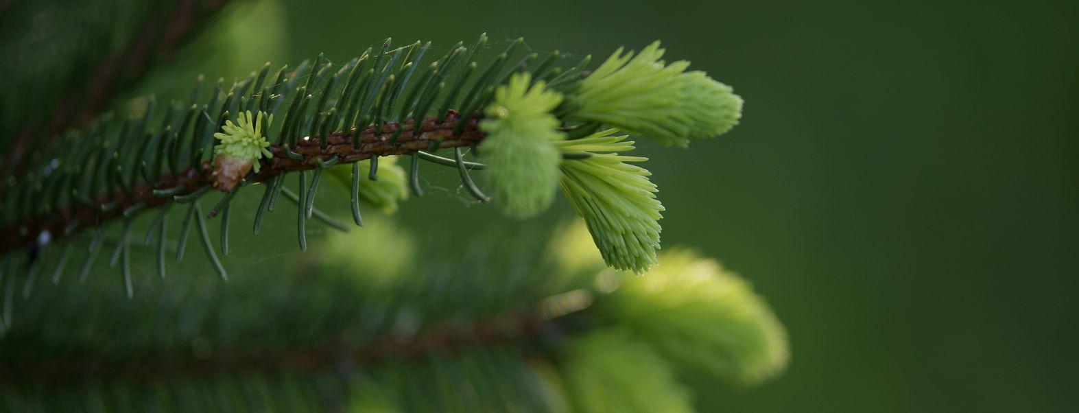 Aktuelle Meldungen rund um die Themen Eigentum und Forstwirtschaft