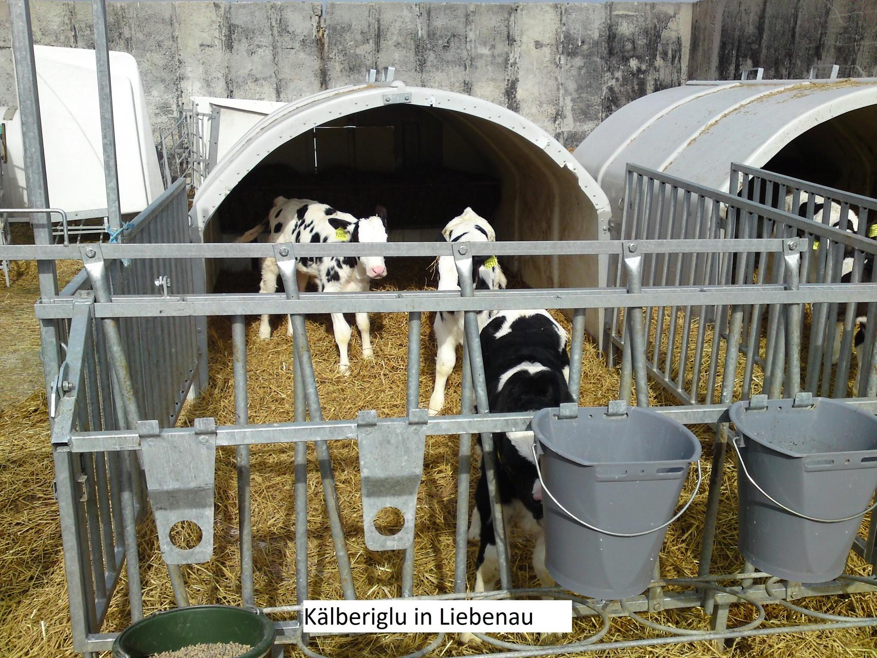 Liebenauer agrar gmbh altenberg webcam