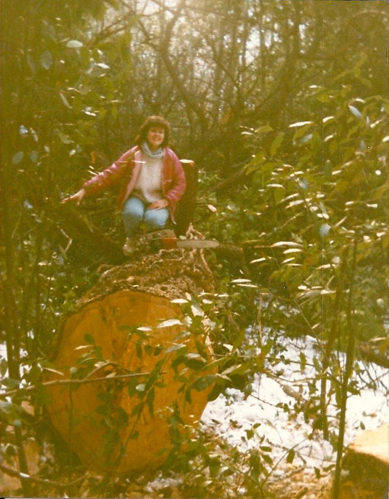 Cèdre, en exploitation forestiére classique