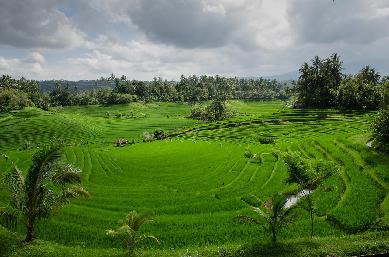 Jatiluwih, Tabanan regency in Bali.