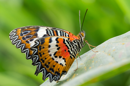 Bali Butterfly Park in Wanasari. Tabanan regency in Bali.